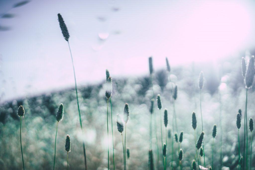 Respiratory Allergies
